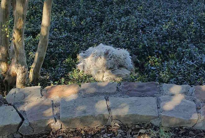 Cachorra abandonada passa dois anos na rua antes de confiar na mulher que queria resgatá-la