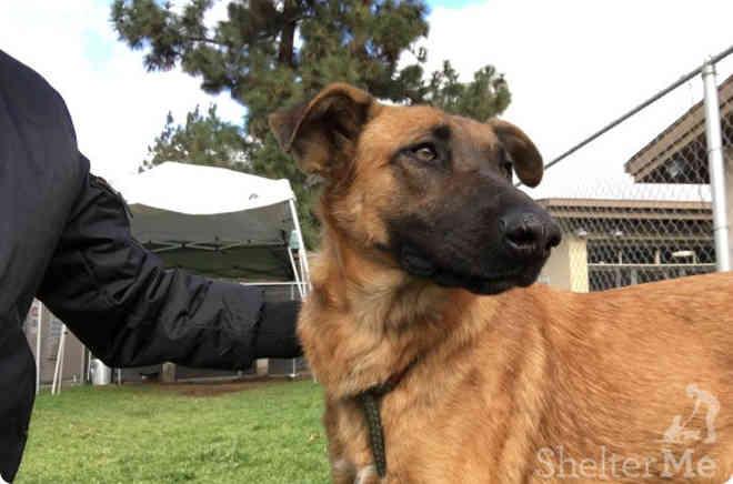 Cadela abandonada em abrigo vê seus antigos tutores à procura de outro animal para adotar