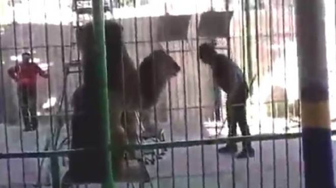 Domador morre após ataque de leão em apresentação de circo no Egito; vídeo
