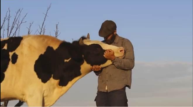 Momento tocante irá mudar para sempre a forma como você vê as vacas