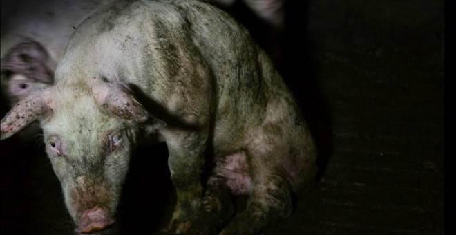 Zaragoza habilita número telefônico contra o maltrato animal