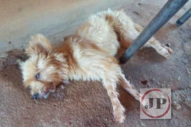 Há suspeitas de animais de rua estão sendo envenenados e mortos em Uruana, GO