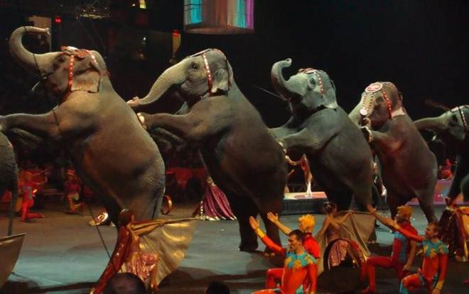 Guadalajara proíbe os circos com animais e o prefeito se questiona sobre o que fazer com o zoológico municipal