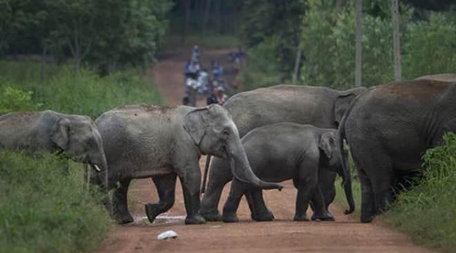 Grupo de direitos dos animais na Índia exige investigação sobre mortes de elefantes