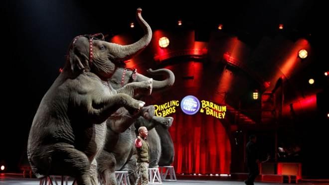Essex, na Inglaterra, proíbe animais em circos, mas não aborda animais em correntes
