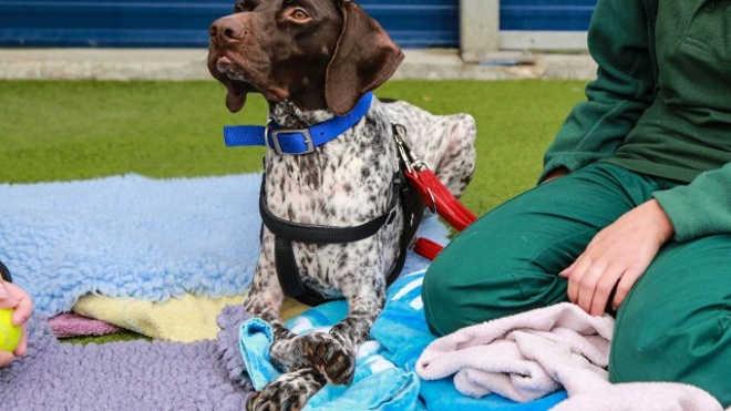 Cão com deformidade nas patas é submetido a cirurgia e passa a andar normalmente