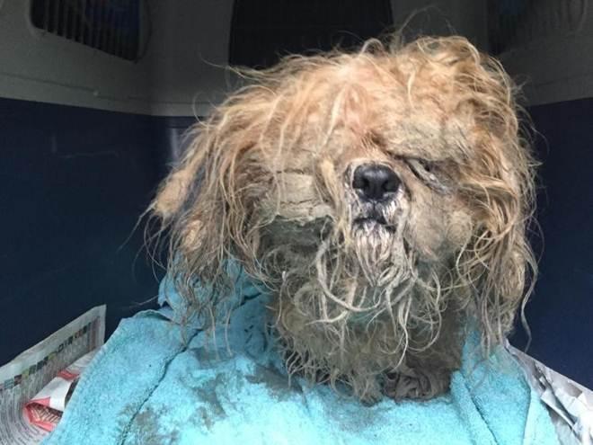 Cão abandonado passa por 'extreme makeover' e ganha novo lar