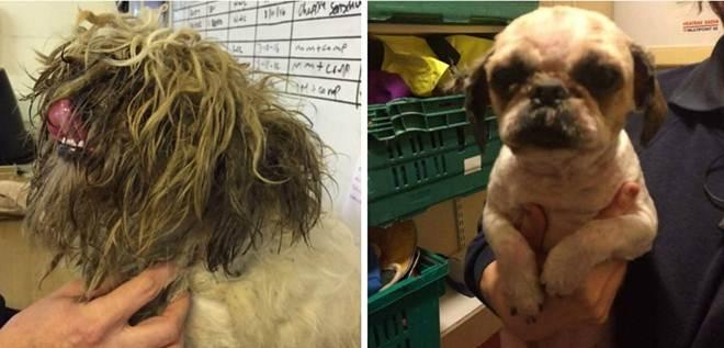 Cão abandonado passa por transformação para voltar a enxergar e a andar