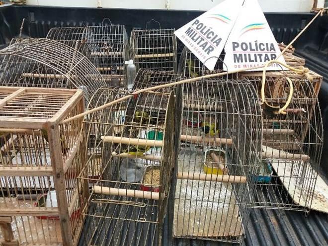 PM prende suspeito de tráfico de animais e resgata pássaros em Capela Nova, MG
