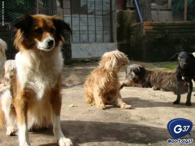 ONG de proteção aos animais pede participação e apoio da população em Divinópolis, MG