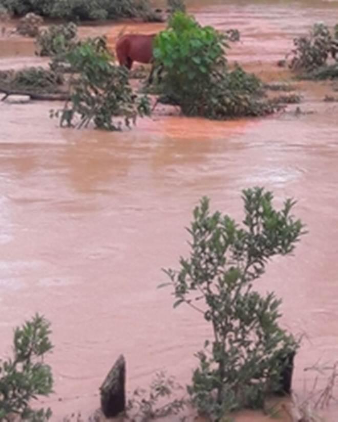 Bombeiros resgatam cavalos ilhados no rio Bananeiras, em Lafaiete, MG