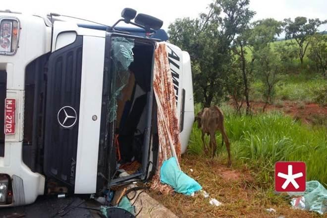 Animais morrem em acidente com caminhão boiadeiro na BR-365