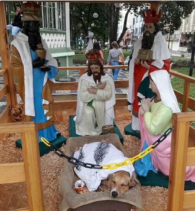 Cachorro de rua dorme em manjedoura de presépio e imagem viraliza na internet