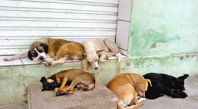 Protetora vai usar tribuna da Câmara para cobrar ações contra maus-tratos a animais em Sete Lagoas, MG