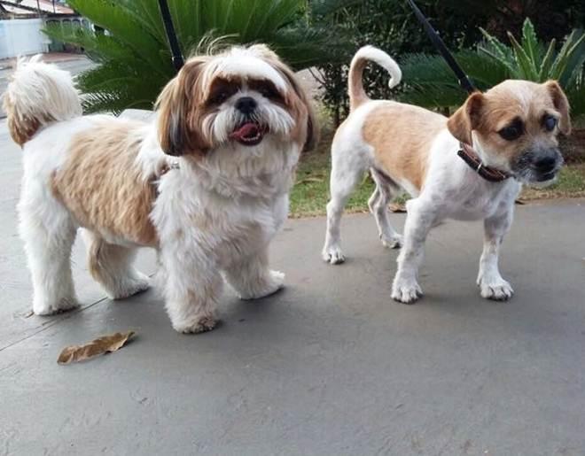 """Tutora dos cães que morreram em """"spa"""" para cachorros processará proprietária"""