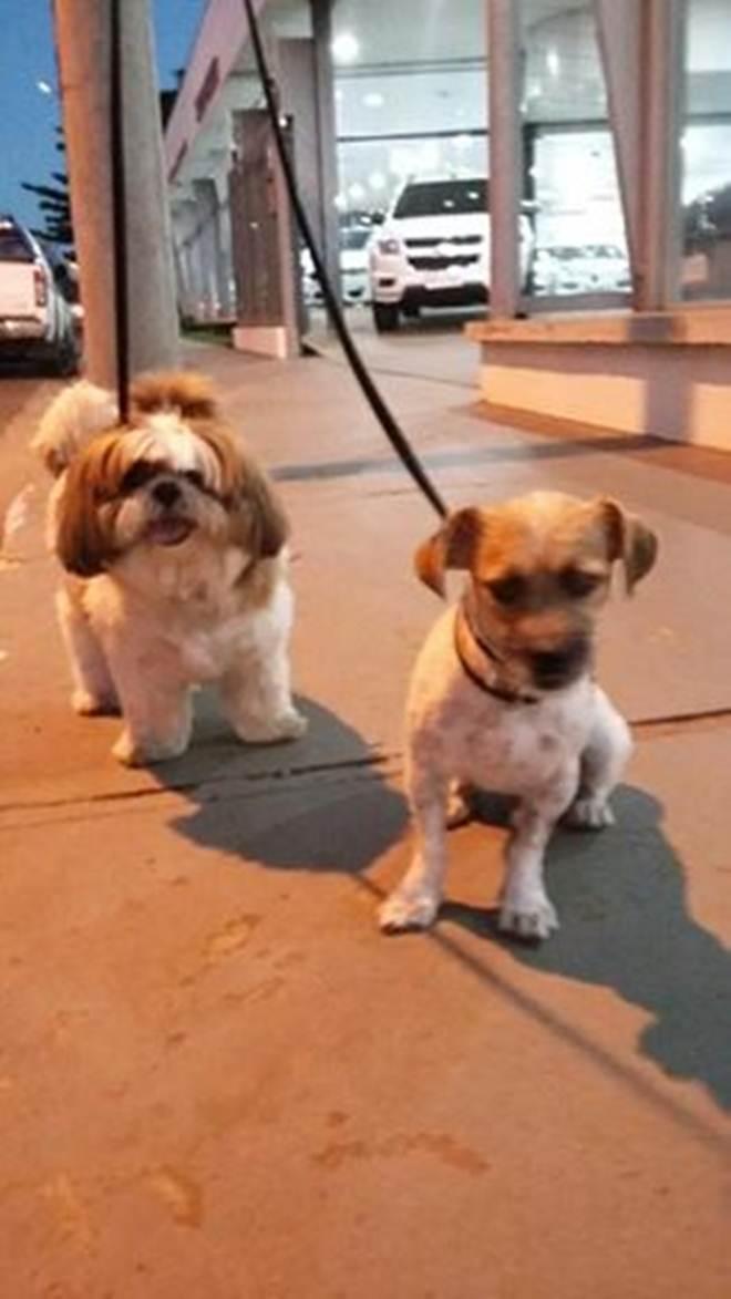 """Dona de """"spa"""" para animais se ausenta e cachorros morrem enforcados na Capital de MS"""