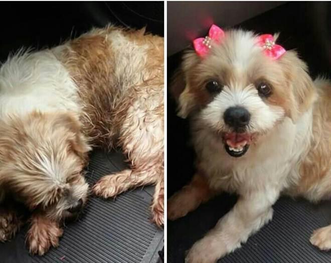 Tutora vive agonia após pet shop buscar 3 cães para o banho, mas só devolver 2