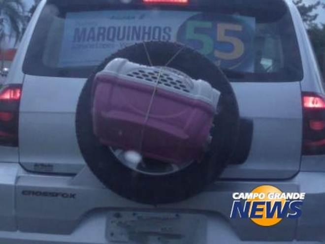 Leitor flagra veículo transportando cachorro em caixa amarrada a pneu em Campo Grande, MS