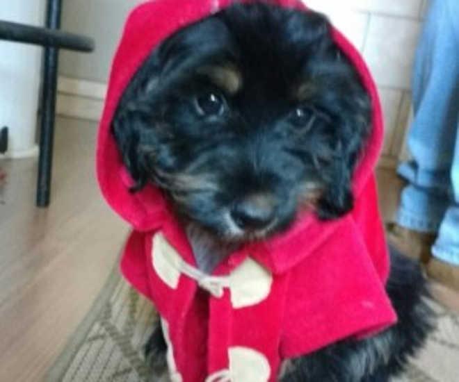 Assustado, cão morde funcionário de pet shop, escapa para a rua e morre atropelado, em Campo Grande, MS