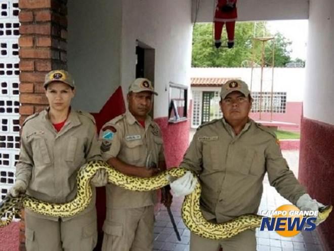 Sucuri de 4 metros é encontrada em hotel, enrolada a filhote de cachorro, em Ladário, MS