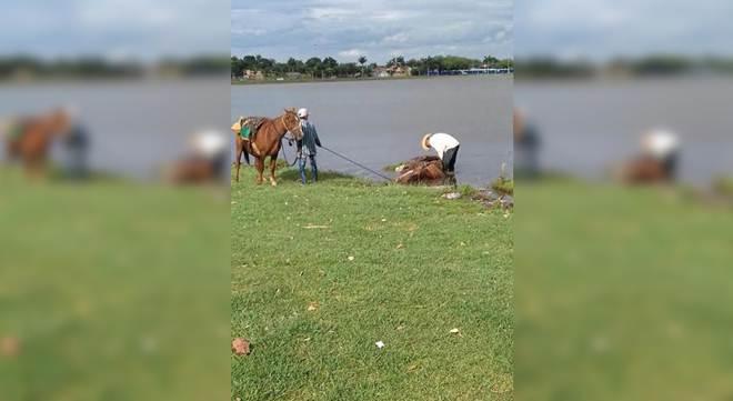 Promotor cobra punição a agressor de cavalo; protetora denunciou caso em Três Lagoas, MS