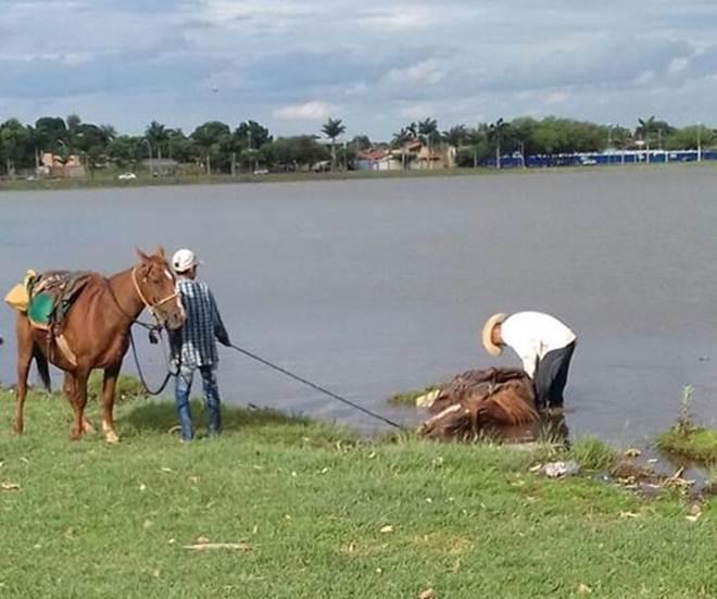 Protetores dos animais criticam cavalgada por maus-tratos a cavalos em Três Lagoas, MS