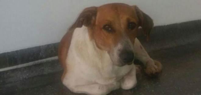Cachorro espera por tutor que morreu em UPA em Cuiabá, MT