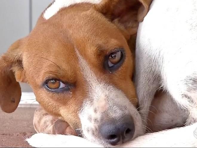 Cadela espera há um mês em porta de hospital por tutor que morreu em MT