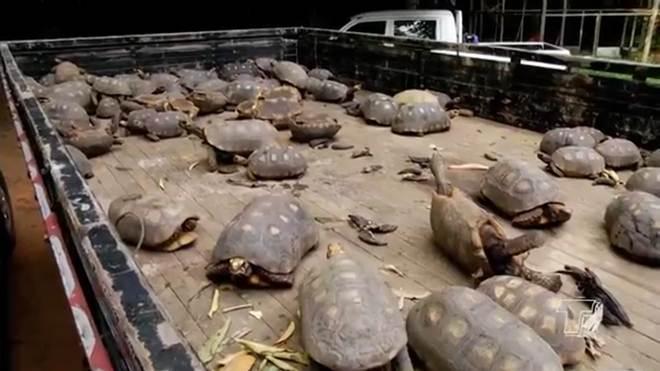 Em Belterra (PA) 351 animais silvestres são reintroduzidos à natureza