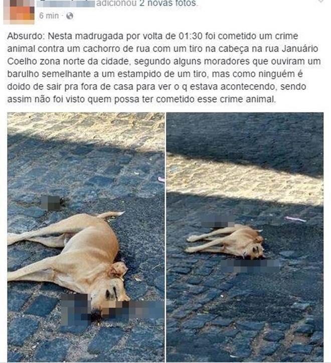 Cachorro é assassinado a tiro em Cajazeiras (PB) e população revoltada denuncia