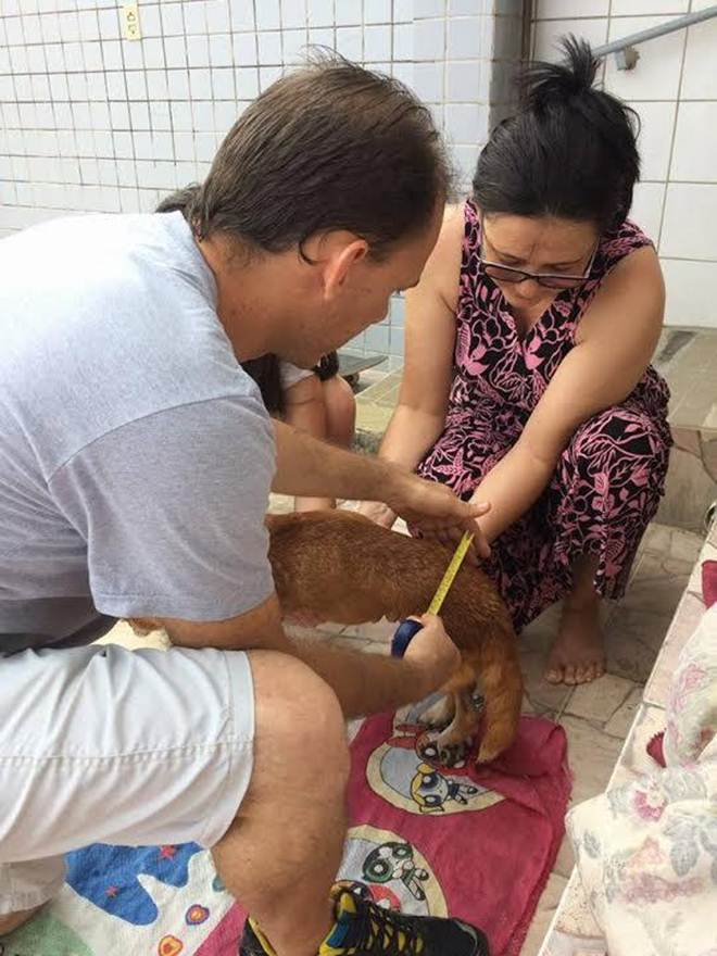 Ong Ajude Anjos de Rua completa um ano de existência em João Pessoa, PB