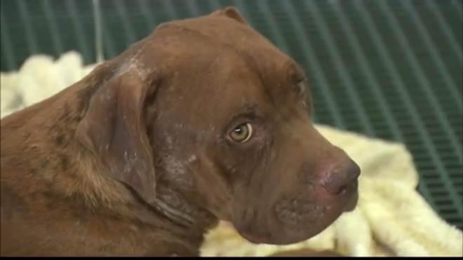 Dois cachorros morrem após resgate em canil clandestino em João Pessoa, PB