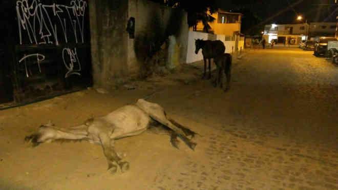 Égua abandonada agoniza no Janga, em Paulista, PE