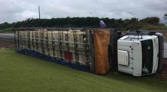 Caminhão carregado com frangos tomba após ser atingido por Strada; animais morreram
