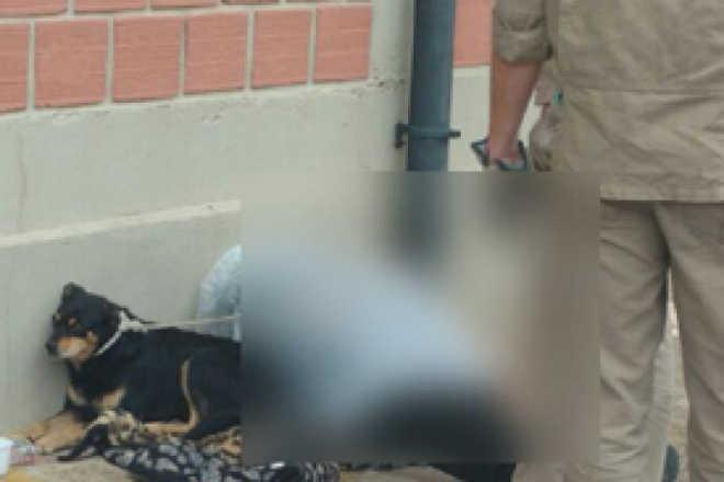 Morador de rua morre e cão não arreda pé do lado do corpo do amigo