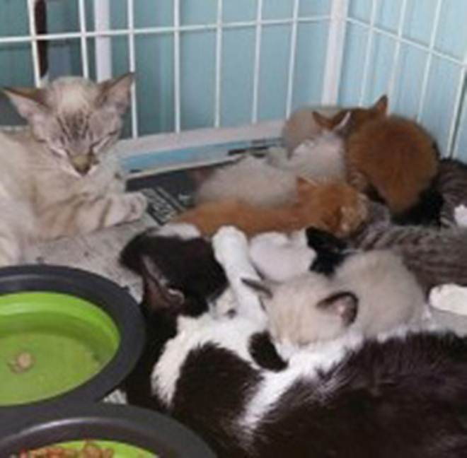 Gatinhos e cachorros em recuperação aguardam adoção na SPAC em Curitiba, PR