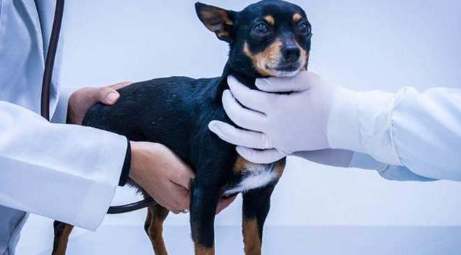 Nesta terça-feira tem castração de cães e gatos da UFPR