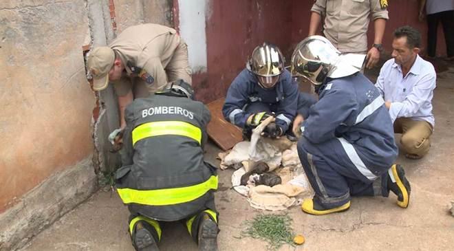 Bombeiros salvam filhotes de cachorro de incêndio na vila Brasil, em Londrina, PR