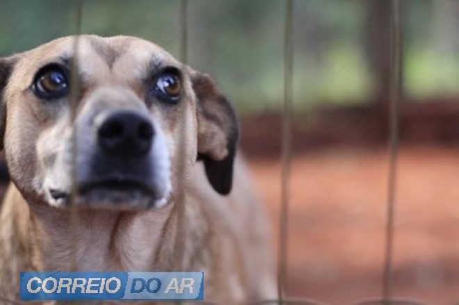 Polícia atende denúncia de maus-tratos a cão em Palotina, PR