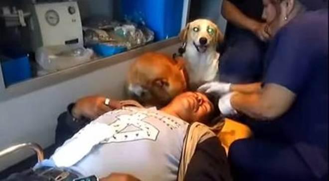 Cachorros entram em ambulância e acompanham tutor atropelado até o hospital