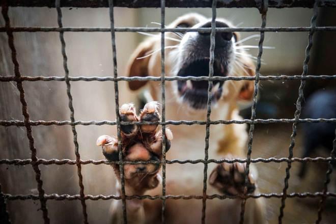 Portugal: Município de Ovar criou Provedoria do Animal