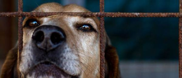 Portugal: Ribeira Grande vai criar cheque veterinário para famílias carenciadas