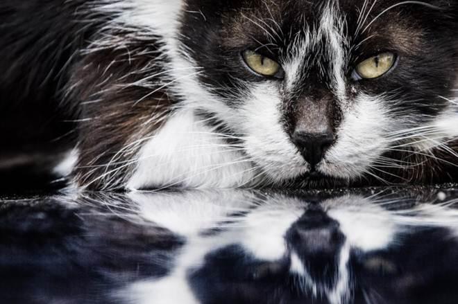 Portugal: Animais deixam de ser coisas, mas lei dos maus tratos vai continuar com buracos