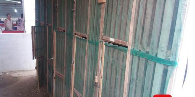 Polícia Ambiental fecha rinha de galo no interior de Cardoso Moreira, RJ