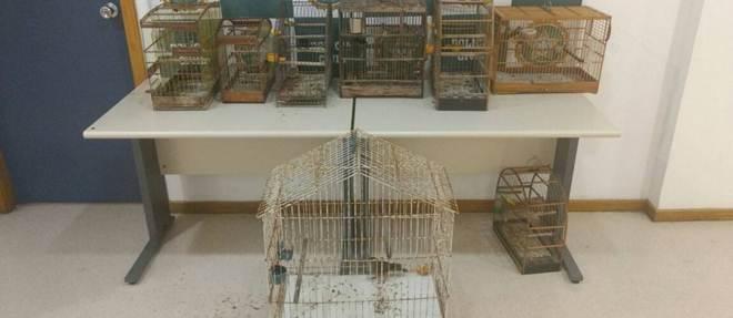 Polícia apreende aves silvestres em academia no RJ