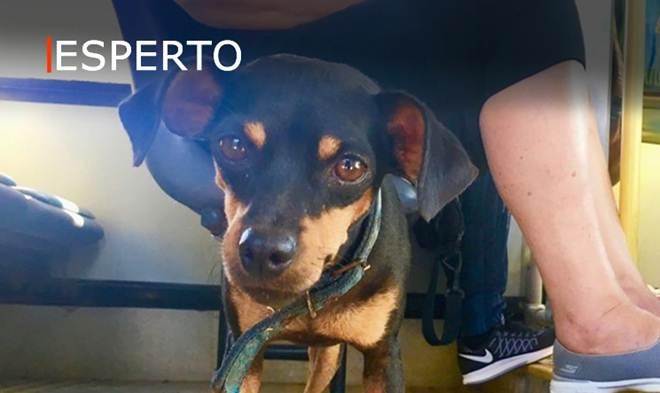Em Fernando de Noronha cão anda de ônibus sozinho para visitar o tutor no trabalho
