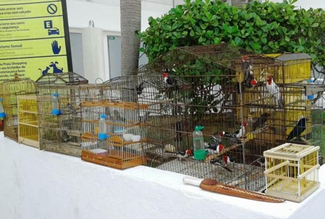 Operação resgata 50 pássaros em feira livre na 'Cidade da Esperança' em Natal, RN
