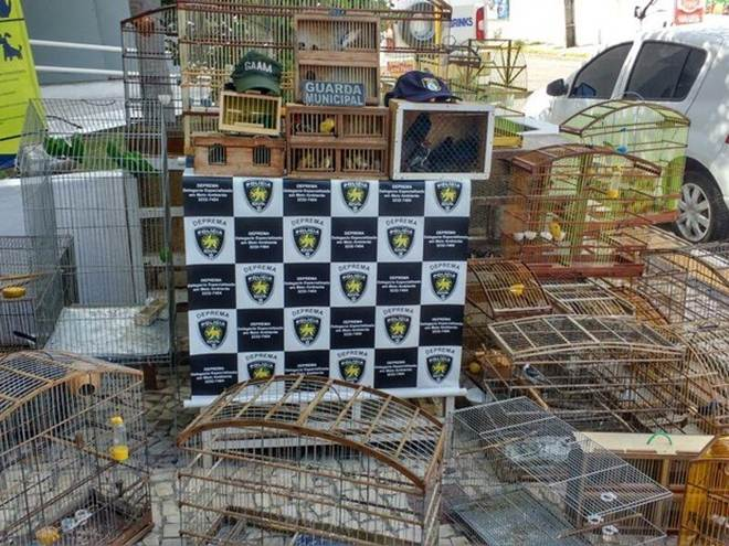 Polícia resgata mais de cem aves silvestres em feira de Natal, RN