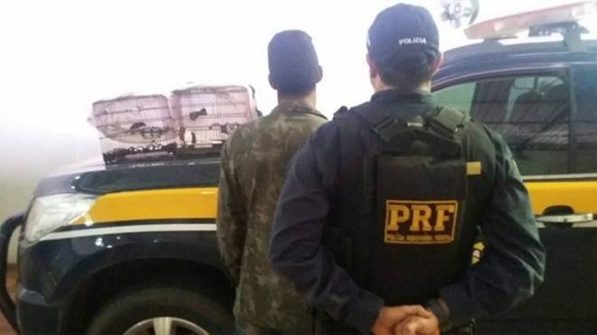 PRF prende homem transportando ave ameaçada de extinção em Rondônia