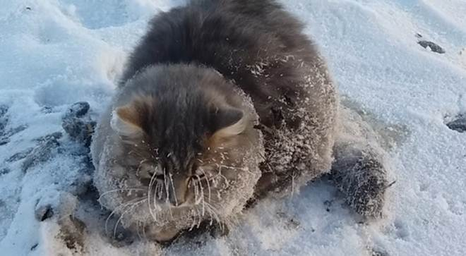 Gato é resgatado após ficar com as patas presas no gelo